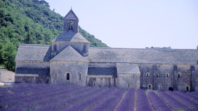 Lavender fields of Provence near Abbey of Cinanque