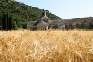 Abbey of Senanque in Provence with wheat fields