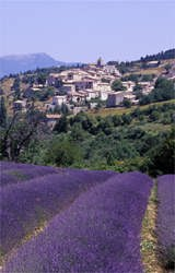 perhed village and clonal lavender during our essential provence tour